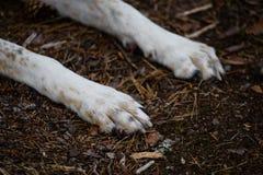 szczęśliwe psie łapy w lesie Zdjęcie Stock