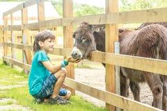 Szczęśliwej młodej chłopiec żywieniowy osioł na gospodarstwie rolnym Zdjęcia Stock