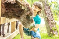 Szczęśliwej młodej chłopiec żywieniowy osioł na gospodarstwie rolnym Fotografia Royalty Free