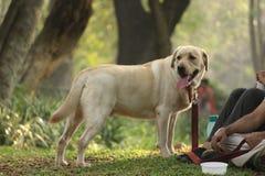 Szczęśliwi cieki w parku obrazy royalty free