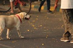 Szczęśliwi cieki w parku Zdjęcie Royalty Free