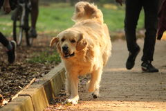 Szczęśliwi cieki w parku zdjęcia stock