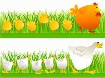Wiosny odprowadzenie Obrazy Stock