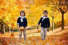 Szczęśliwi dzieci, chłopiec bracia, bawić się w parku z liśćmi fotografia royalty free