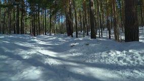 Szczęśliwi dzieciaki jadą na snowmobile w lesie wpólnie zbiory