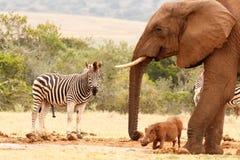 Szczęśliwi dzikie zwierzęta Zdjęcie Stock