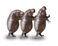 Szczęśliwi hipopotamy Zdjęcia Royalty Free