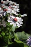 Szczęśliwi kwiaty na Niedzieli zdjęcie stock