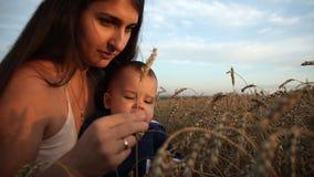 Szczęśliwi potomstwa macierzyści i jej syn siedzą w pszenicznym polu Dziecko ciekawie patrzeje ucho banatka zdjęcie wideo