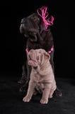 szczęśliwi psi przyjaciele Obraz Royalty Free