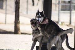 Szczęśliwi psy przy sztuką Zdjęcie Royalty Free