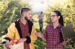 Szczęśliwi rolnicy w sadzie Obraz Royalty Free