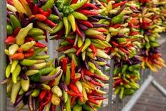 Szczęśliwi veggies Zdjęcia Stock