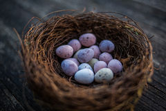 Szczęśliwi Wielkanocni cukierku Easter jajka w ptakach gniazdują Fotografia Royalty Free