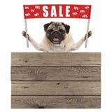 Szczęśliwy śliczny mopsa szczeniaka pies trzyma up czerwonego sztandaru znaka z tekst sprzedażą % daleko, z drewnianym knurem Zdjęcia Stock
