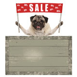 Szczęśliwy śliczny mopsa szczeniaka pies trzyma up czerwonego sztandaru znaka z tekst sprzedażą % daleko, z rocznik drewnianą des Zdjęcia Royalty Free