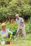 Szczęśliwy babci i dziadu ogrodnictwo Zdjęcia Royalty Free
