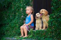 Szczęśliwy chłopiec obsiadanie z dwa złotymi Labrador retriever szczeniakami Zdjęcie Royalty Free