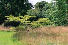 szczęśliwy drzewo Zdjęcie Royalty Free