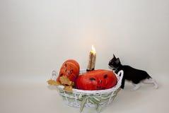 Szczęśliwy Halloween! Czarny kot! Zdjęcia Royalty Free