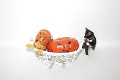 Szczęśliwy Halloween! Czarny kot! Obrazy Stock