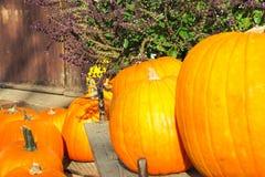 Szczęśliwy Halloween lub dziękczynienia karciany tło, dekoracyjna tapeta obraz stock