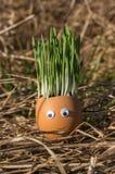 Szczęśliwy jeden jajko Obraz Stock
