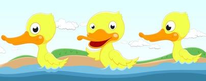 Szczęśliwy kaczki dopłynięcie Zdjęcia Royalty Free