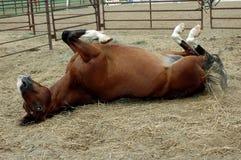 szczęśliwy koń zdjęcie stock