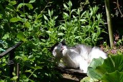 szczęśliwy kot obraz stock
