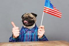 Szczęśliwy mężczyzna z mops psiej głowy mienie jednoczącymi stanami zaznacza Obraz Royalty Free