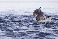 Szczęśliwy młody delfin zdjęcia stock