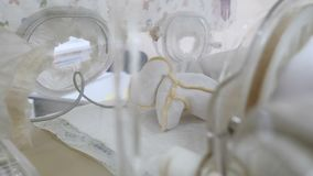Szczęśliwy Macierzyński pojęcie nowonarodzony w inkubatorze, intensywna szpitalna terapia: CCU, ICU, ITU przedterminowy dziecko w zbiory