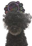 Szczęśliwy nowego roku pies Fotografia Royalty Free