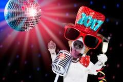 Szczęśliwy nowego roku psa celberation fotografia royalty free