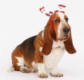 Szczęśliwy nowy rok, Bożenarodzeniowy baset, odizolowywający na bielu Obrazy Stock