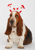 Szczęśliwy nowy rok, Bożenarodzeniowy baset, odizolowywający na bielu Zdjęcie Royalty Free