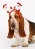 Szczęśliwy nowy rok, Bożenarodzeniowy baset, odizolowywający na bielu Fotografia Royalty Free