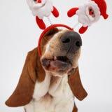 Szczęśliwy nowy rok, Bożenarodzeniowy baset, odizolowywający na bielu Zdjęcia Royalty Free
