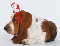 Szczęśliwy nowy rok, Bożenarodzeniowy baset, odizolowywający na bielu Zdjęcia Stock