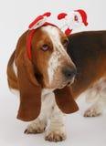 Szczęśliwy nowy rok, Bożenarodzeniowy baset, odizolowywający na bielu Fotografia Stock