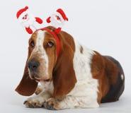 Szczęśliwy nowy rok, Bożenarodzeniowy baset, odizolowywający na bielu Obraz Stock