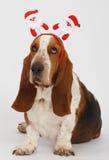 Szczęśliwy nowy rok, Bożenarodzeniowy baset, odizolowywający na bielu Zdjęcie Stock