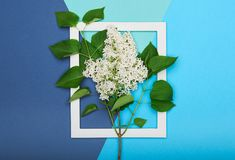 Szczęśliwy ojca ` s dzień, urodziny błękit lub turkus Colours tło i Kwiecistego mieszkania minimalizmu nieatutowy kartka z pozdro Zdjęcie Stock