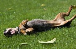 Szczęśliwy pies obrazy stock
