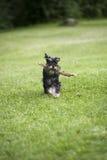 Szczęśliwy pies Obraz Stock