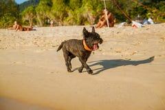 Szczęśliwy pies na plaży podczas gdy na wakacje obrazy stock