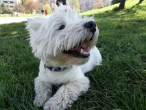 Szczęśliwy pies na trawie obrazy stock