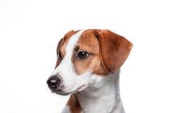 Szczęśliwy pies Odizolowywający Obraz Royalty Free