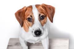 Szczęśliwy pies Odizolowywający Zdjęcia Stock